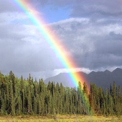 The Journey of Grief: Waiting for a Rainbow