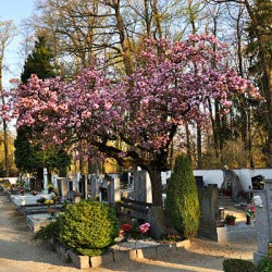 How to Choose a Cemetery and Plot