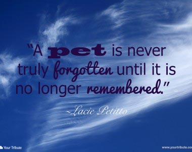 Lacie Petitto: A pet is never truly…